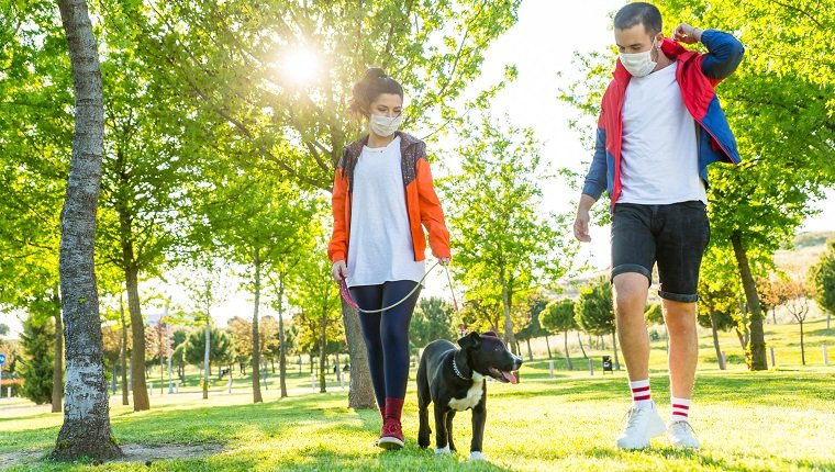 Jeune couple pendant l'isolement pandémique marchant avec son chien dans un parc.