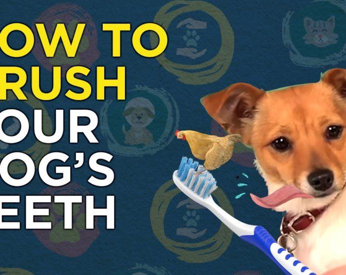Comment brosser les dents de votre chien - Vidéo