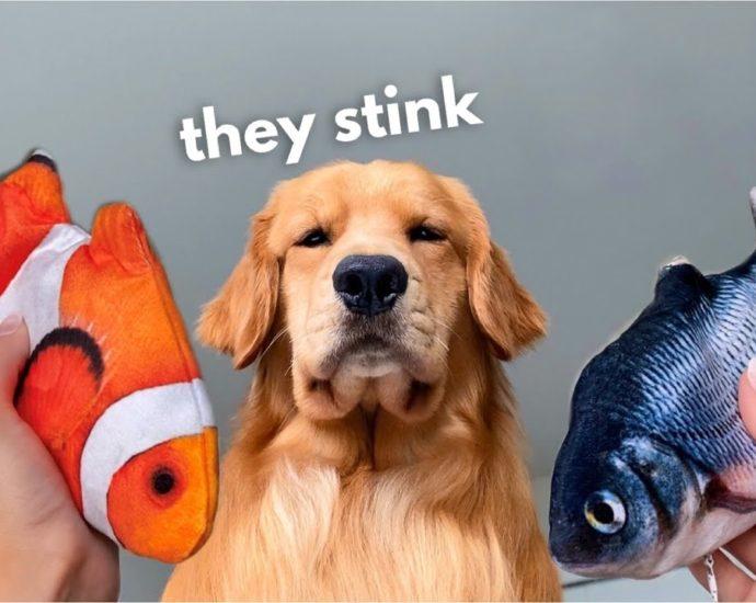 Mon chien réagit au poisson flottant