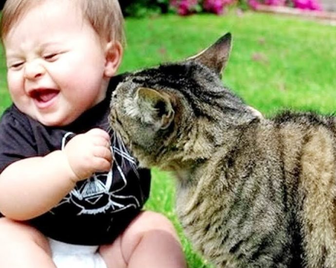Funny Cats And Babies Playing Together ★ Animals Trolling Babies